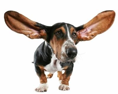 Βαρηκοΐα στους σκύλους